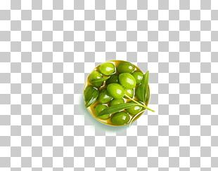 Olive Google S Icon PNG