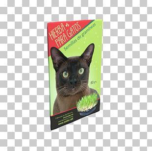 Korat Kitten Whiskers Dog Food PNG