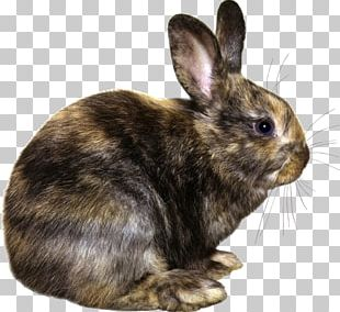Easter Bunny Hare Domestic Rabbit European Rabbit PNG