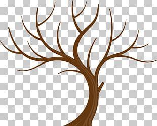 Tree Branch Leaf PNG