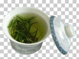 Green Tea Drinking Health PNG