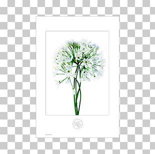 Medicinal Plants Pianta Officinale Botany Garlic PNG