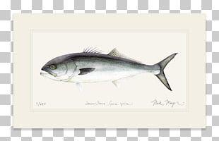Sardine Mackerel Bluefish Yellowfin Tuna Oily Fish PNG