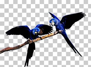 Blue-throated Macaw Blue-and-yellow Macaw Bird Great Green Macaw PNG