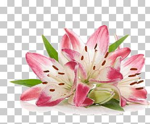 Cut Flowers Photography White Pink PNG