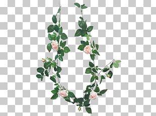Plant Stem Leaf Flower PNG