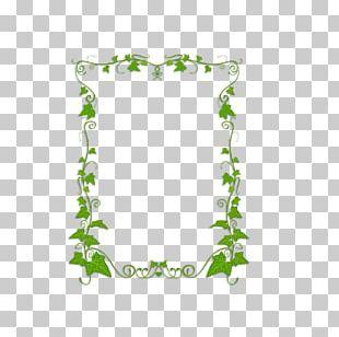 Common Ivy Plant Vine PNG
