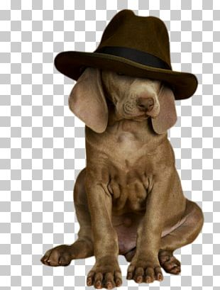 Dog Breed Puppy Weimaraner Puppies Sporting Group PNG