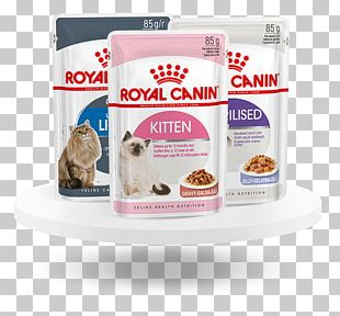Cat Food Kitten Persian Cat Dog Maine Coon PNG