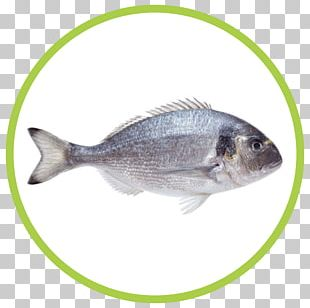 Fish Gilt-head Bream Seafood PNG