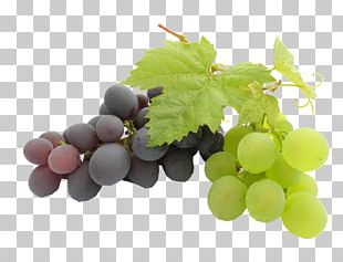 Grape Seed Oil Kyoho Grape Leaves Grape Seed Extract PNG