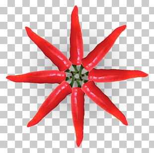 Drawing Christmas Star Paper Color PNG