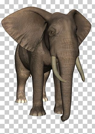 Indian Elephant African Elephant Tusk Wildlife PNG