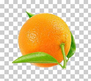 Tangerine Mandarin Orange Tangelo Rangpur Clementine PNG