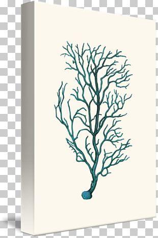 Printmaking Canvas Graphic Arts Vintage Print PNG