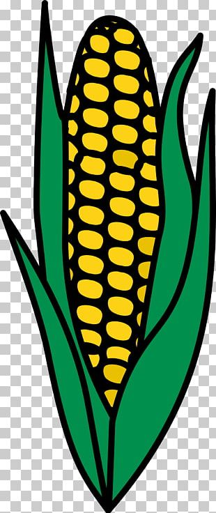 Corn On The Cob Maize Food Corn Allergy PNG