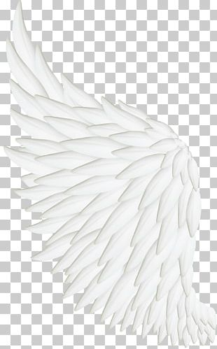 Bird Wing White Feather PNG