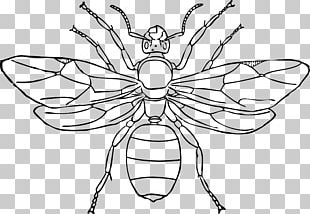 Queen Ant Insect Drawing PNG