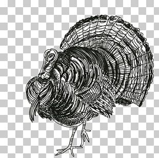 Turkey Thanksgiving Black And White Rooster PNG