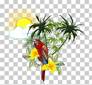 Scarlet Macaw Parrot Bird PNG