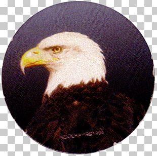 Bald Eagle Bird White-tailed Eagle Beak PNG