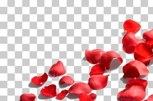 Petal Flower Rose PNG