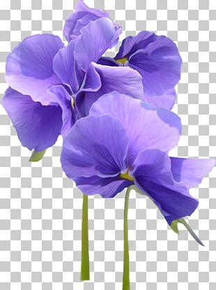 Violet Parr Flower Pansy PNG