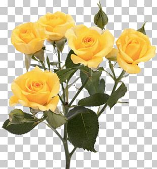 Garden Roses Flower Yellow Pink PNG