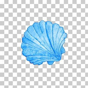 Seashell Watercolor Painting Photography PNG
