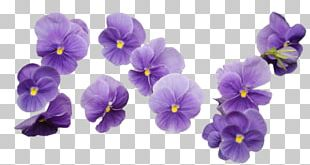 Flower Lavender Purple PNG