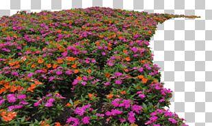 Flower Garden Shrub Plant PNG
