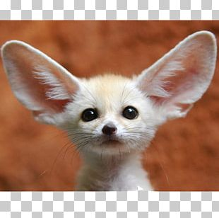 Fennec Fox Pet Animal Pembroke Welsh Corgi PNG