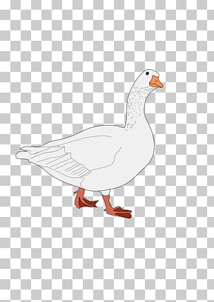 Bird Domestic Duck Goose Cygnini PNG