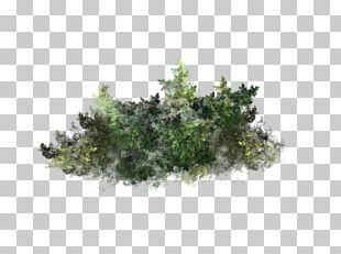 Tree Plant Algae Underwater PNG