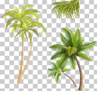 Coconut Water Coconut Jam Arecaceae PNG