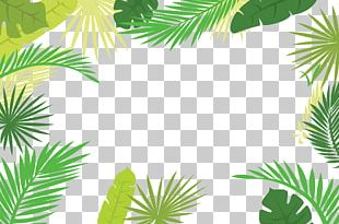 Arecaceae Text Branch Leaf Illustration PNG