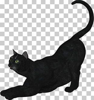 Black Cat Bombay Cat Burmese Cat Korat Domestic Short-haired Cat PNG
