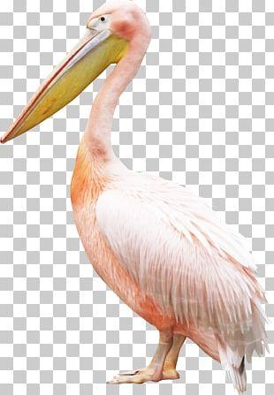 Bird Pelican Crane PNG