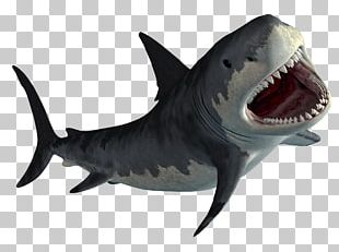 Hungry Shark World Hungry Shark Evolution MPEG-4 Part 14 PNG