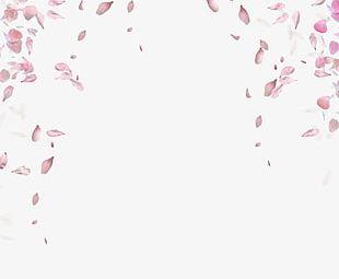 Rose Petals Floating Material PNG