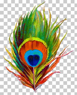 Krishna Paper Feather Bird Peafowl PNG