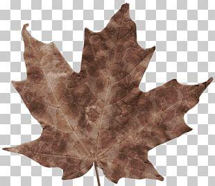 Autumn Leaves Autumn Leaf Color Maple Leaf PNG