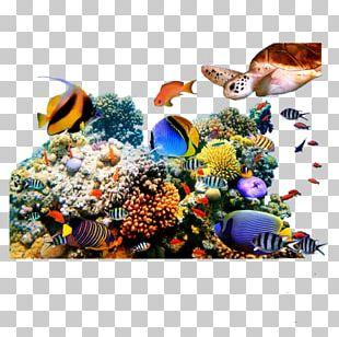 Coral Reef Fish Underwater PNG