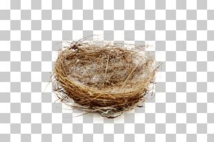Edible Birds Nest Bird Nest PNG