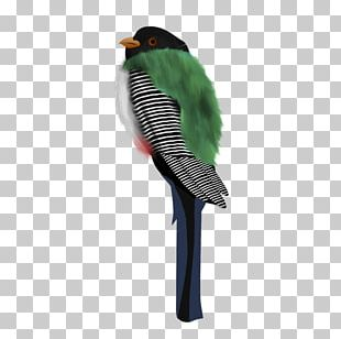Parakeet Feather Beak PNG