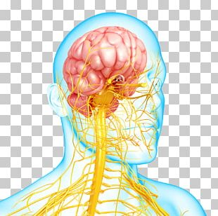 Nervous System Disease Mental Disorder Autonomic Nervous System PNG