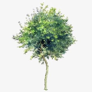 Trees Trees Transparent Background Elements PNG