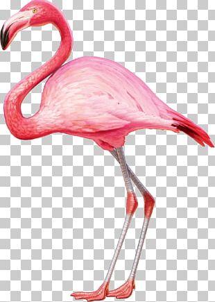 American Flamingo Greater Flamingo T-shirt Bird PNG