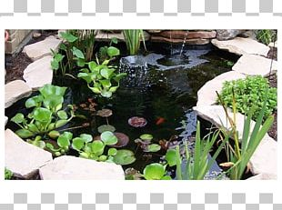 Body Of Water Pond Landscaping Garden Water Feature PNG