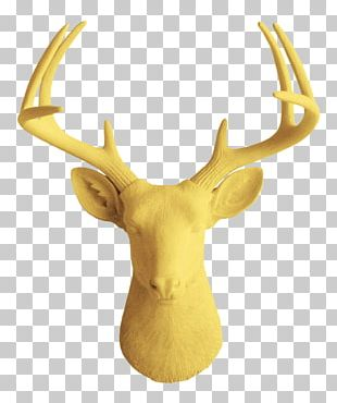 White-tailed Deer Wall Decal Decorative Arts PNG